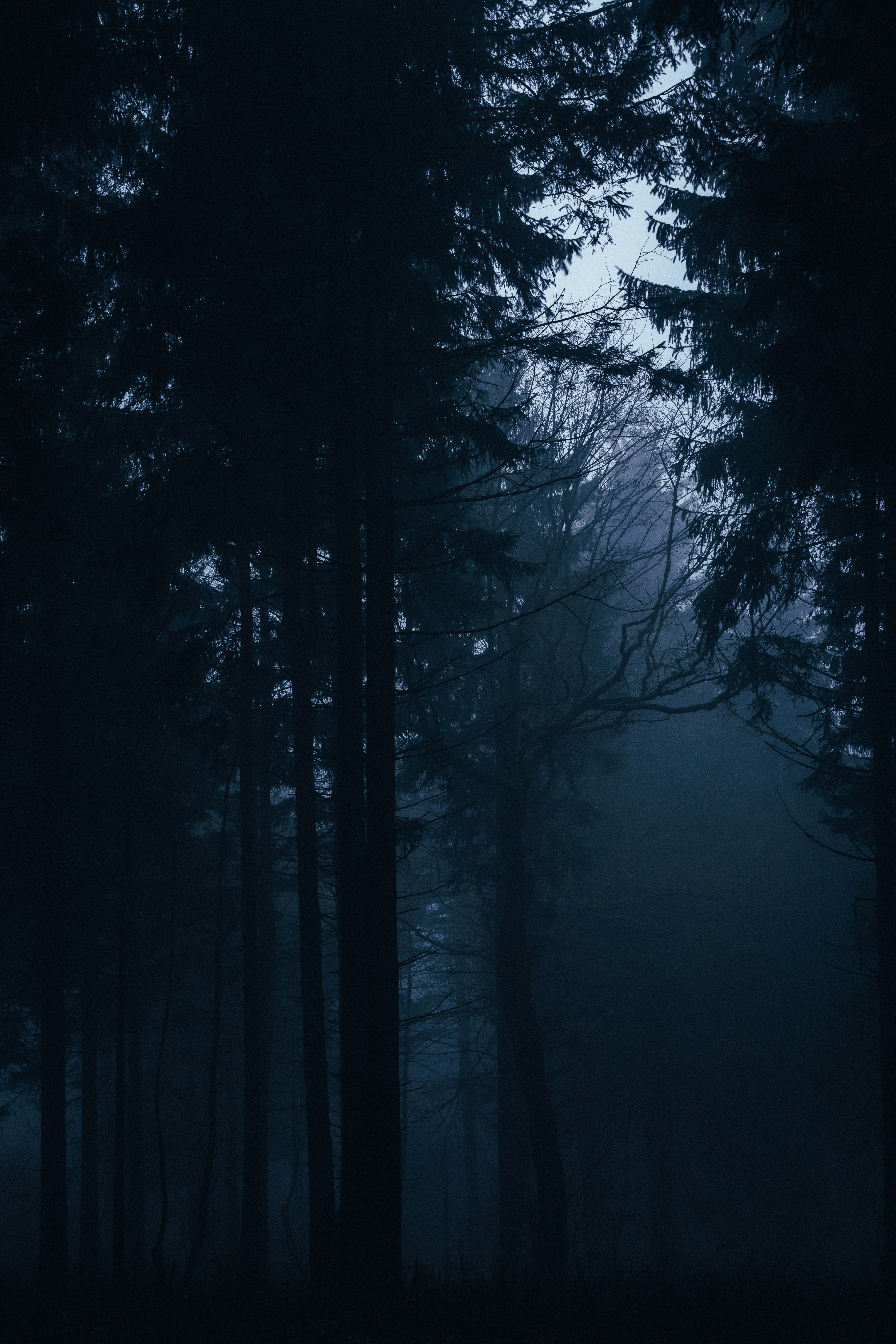 140441 download wallpaper Dark, Trees, Forest, Fog, Darkness screensavers and pictures for free
