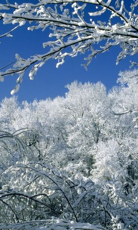 12126 скачать обои Пейзаж, Зима, Деревья, Снег - заставки и картинки бесплатно