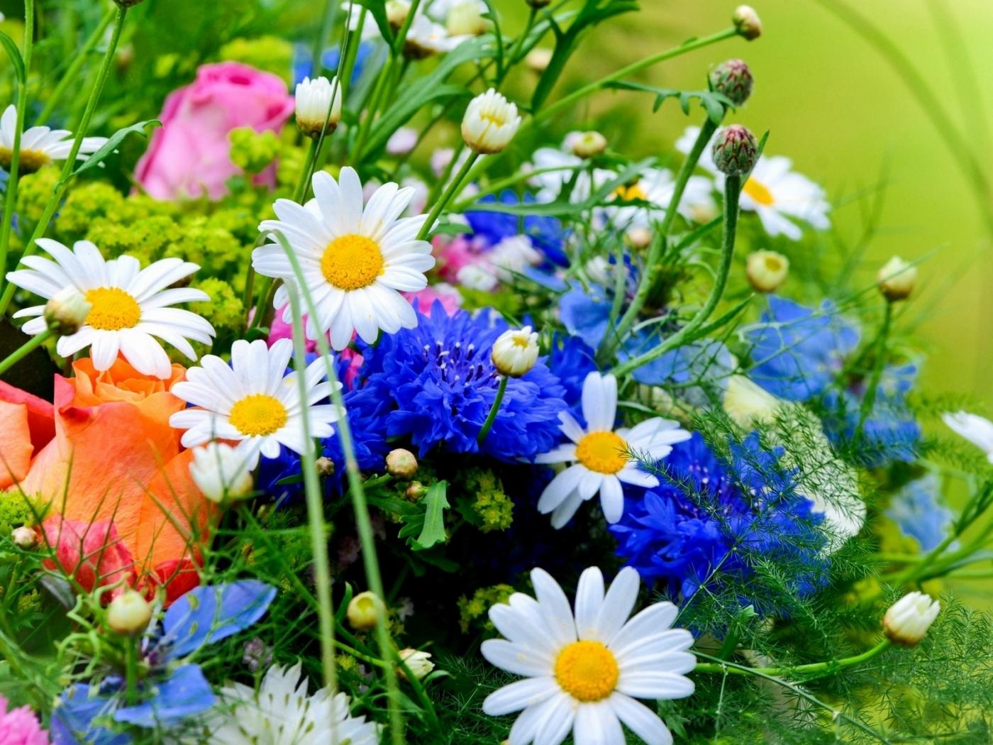 40470 скачать обои Растения, Цветы - заставки и картинки бесплатно
