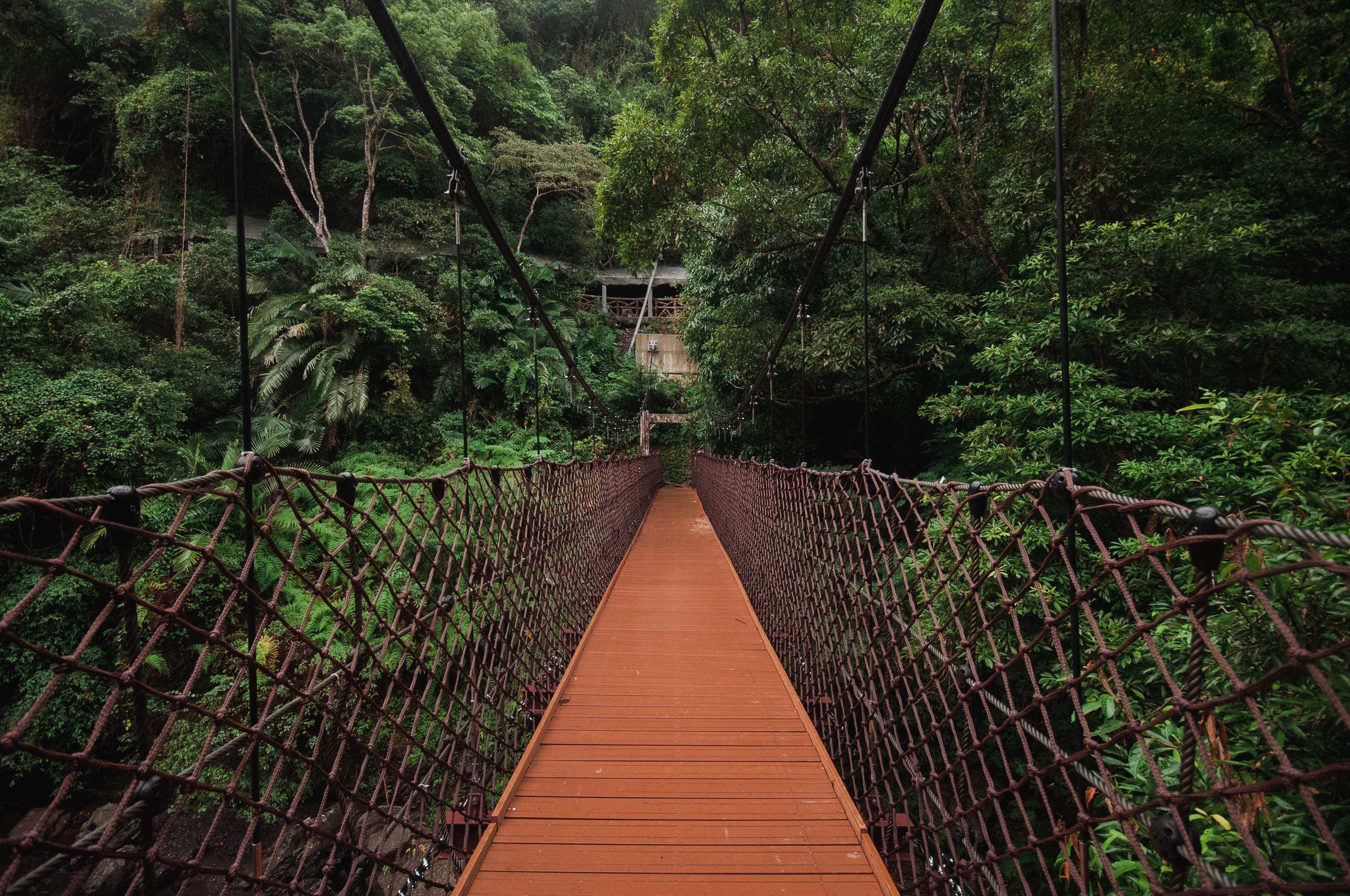 113948 скачать обои Природа, Деревья, Мост, Подвесной, Плетение - заставки и картинки бесплатно