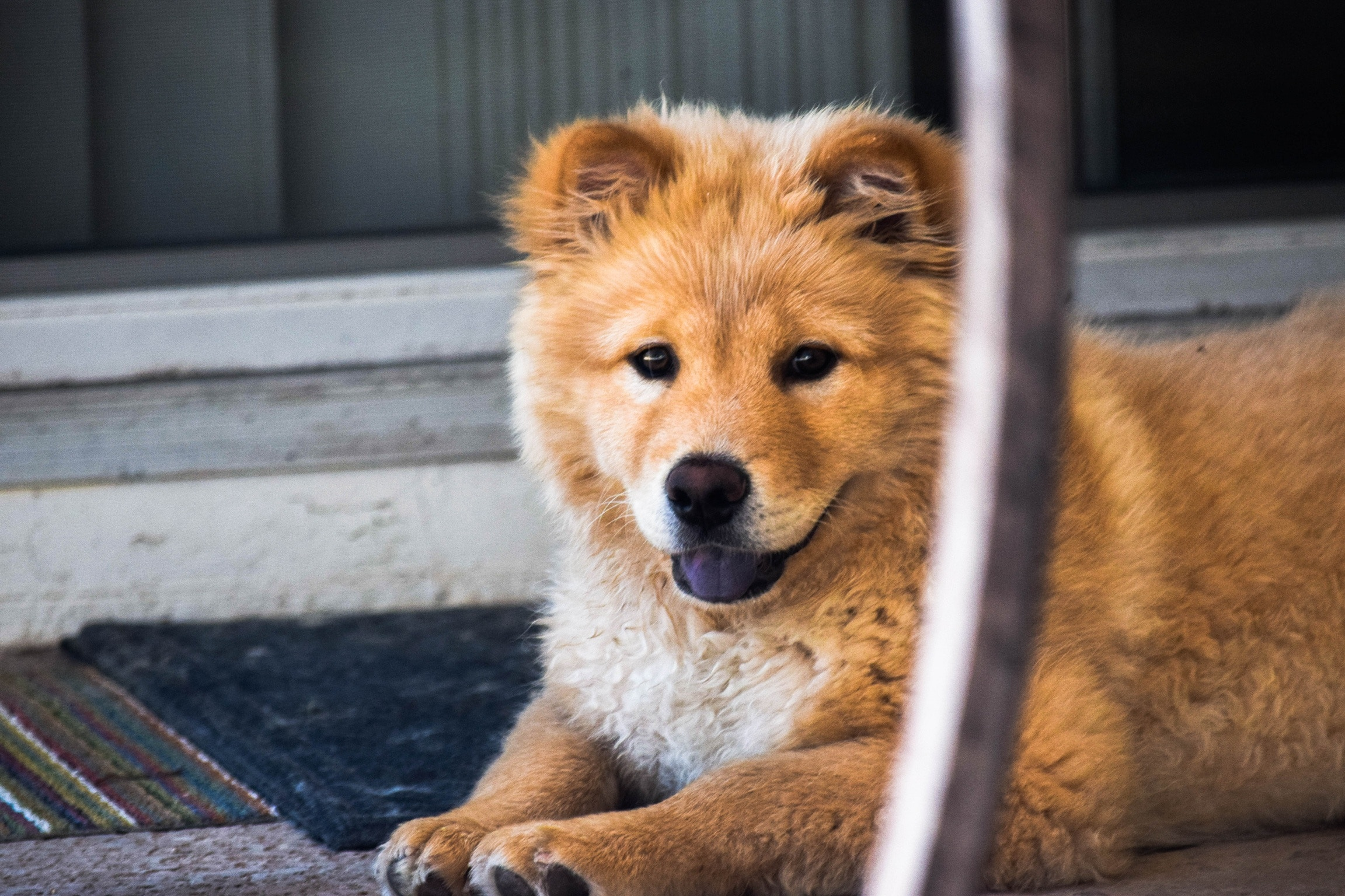 156973 download wallpaper Animals, Dog, Muzzle, Sight, Opinion, Redhead screensavers and pictures for free