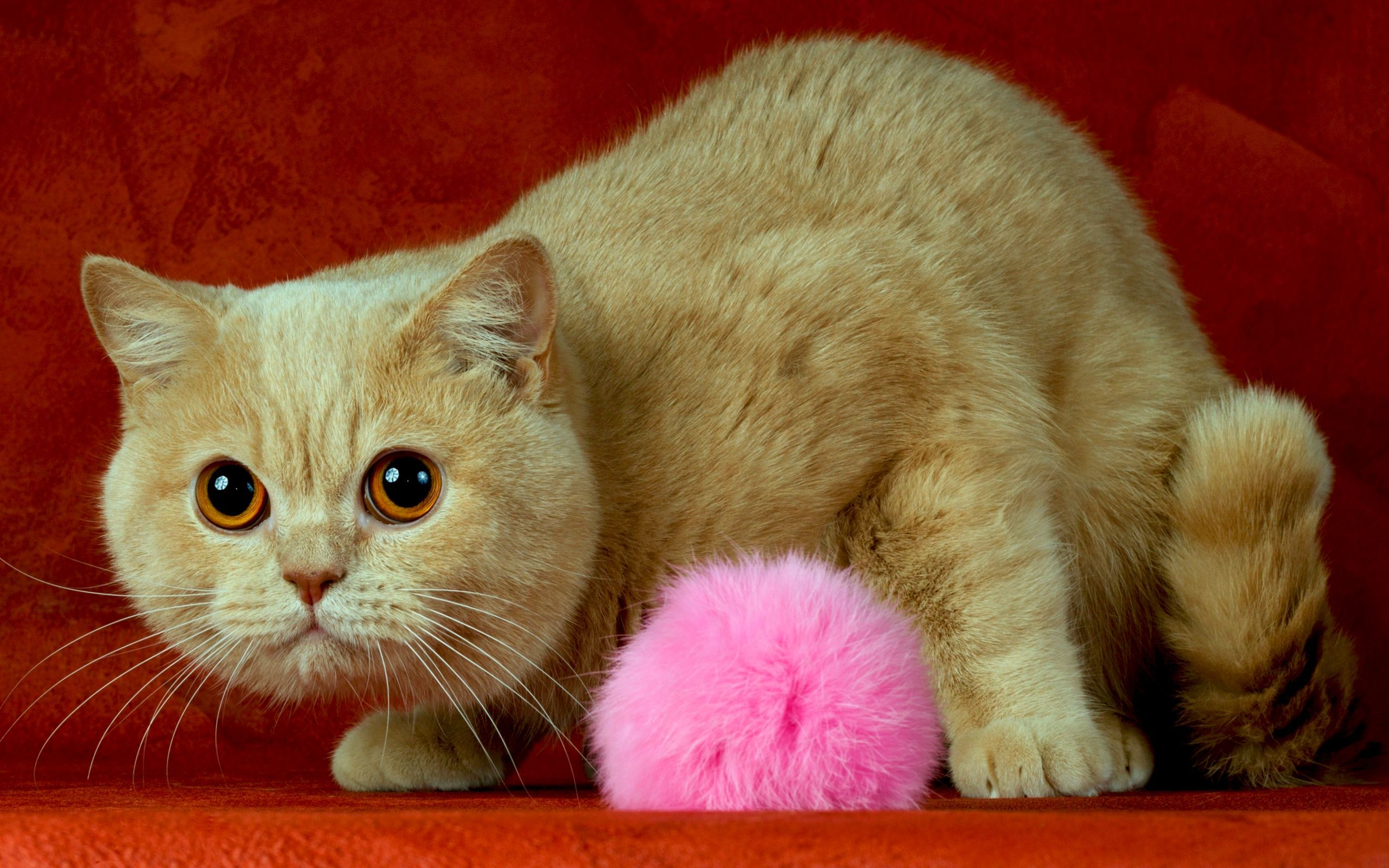 49461 download wallpaper Animals, Cats screensavers and pictures for free
