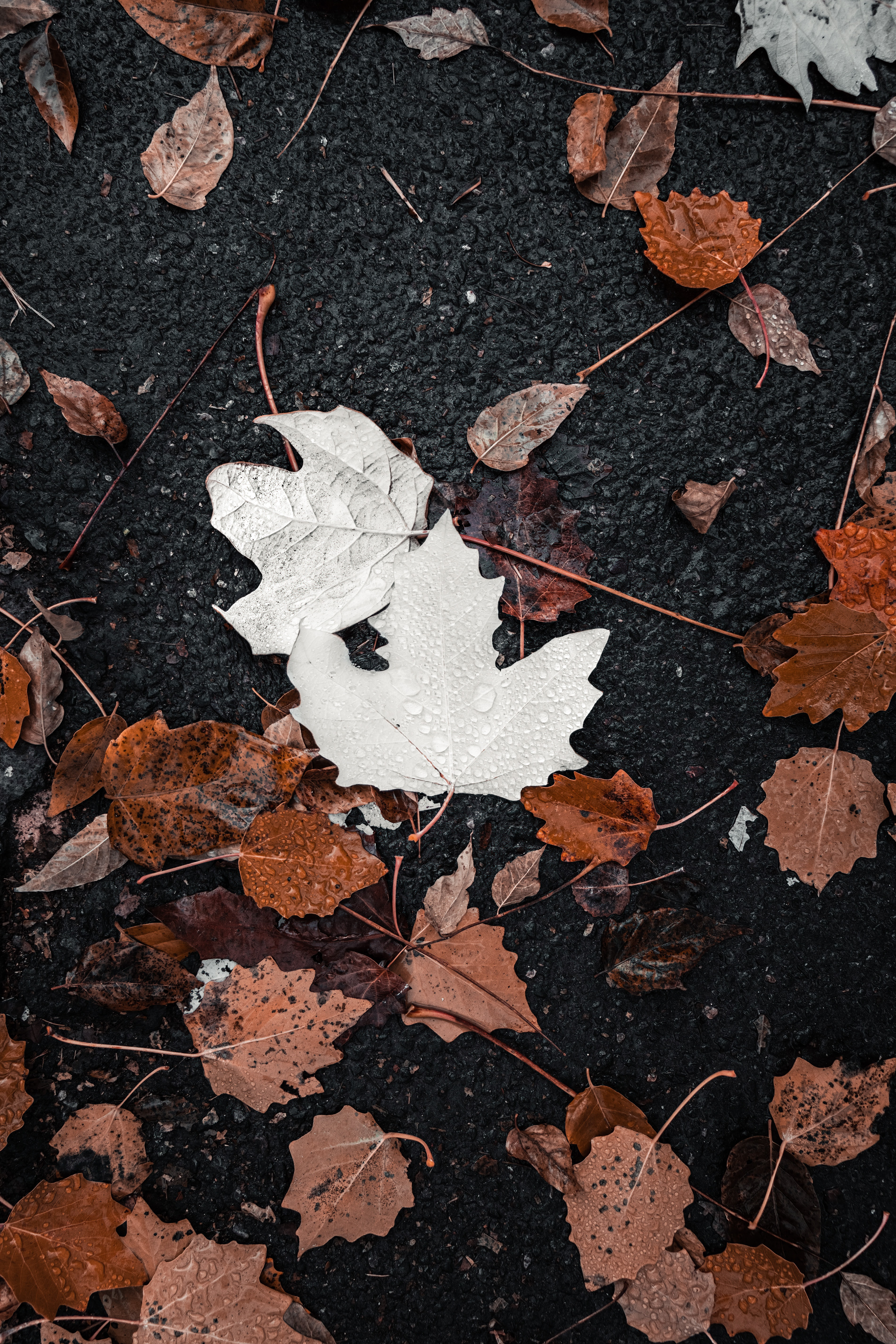 110372 download wallpaper Nature, Leaves, Drops, Water, Autumn screensavers and pictures for free