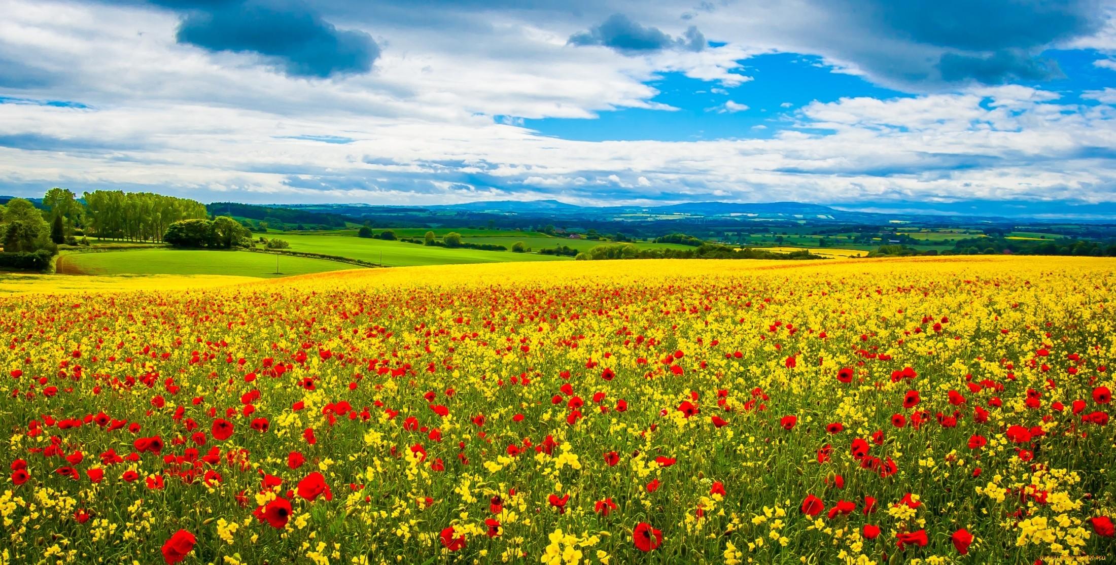 17943 скачать обои Пейзаж, Поля, Небо, Маки, Облака - заставки и картинки бесплатно