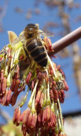 30183 Salvapantallas y fondos de pantalla Insectos en tu teléfono. Descarga imágenes de Insectos, Abejas gratis