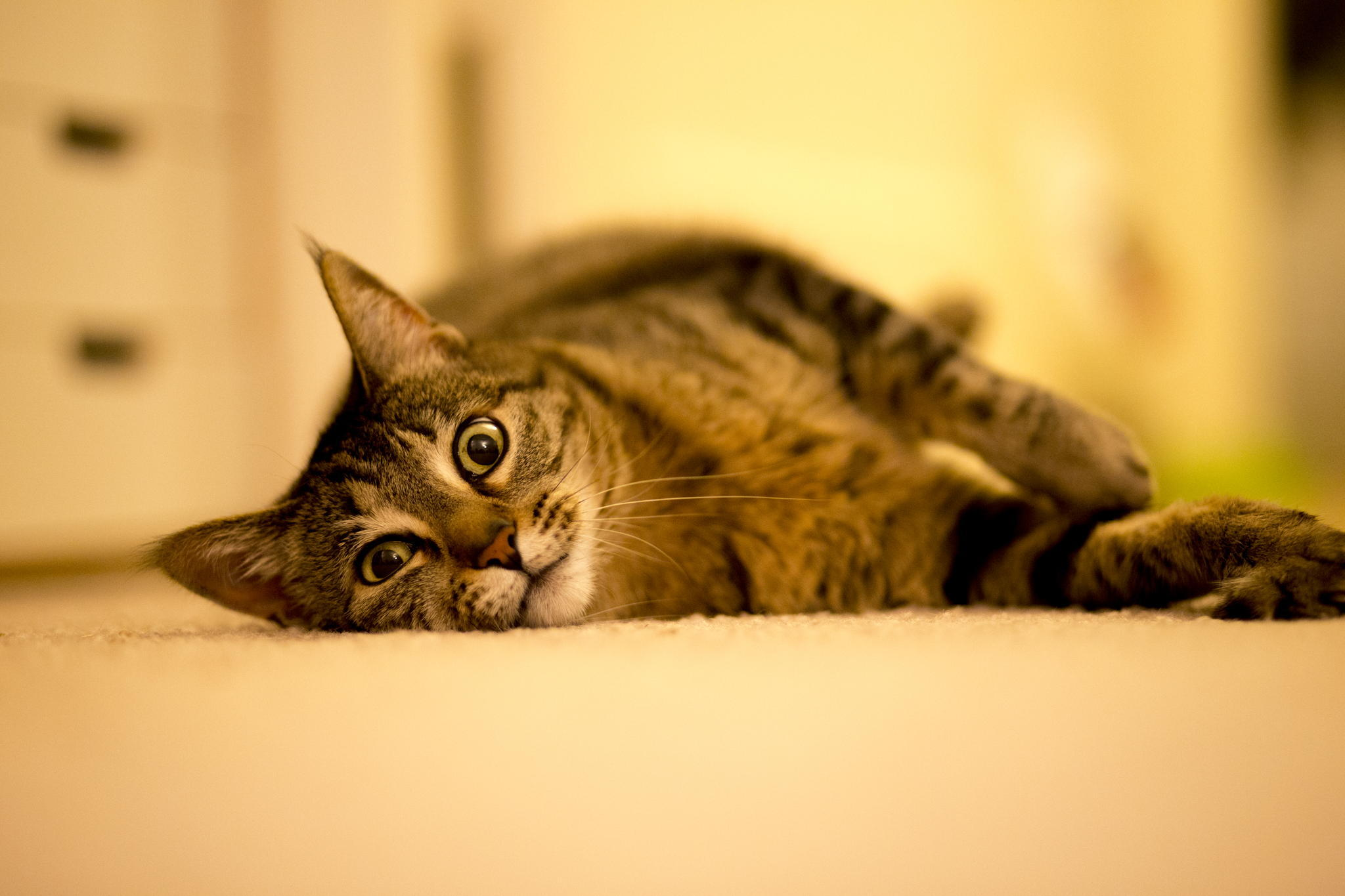 106461 download wallpaper Animals, Cat, Lies, Striped, Fat, Thick screensavers and pictures for free