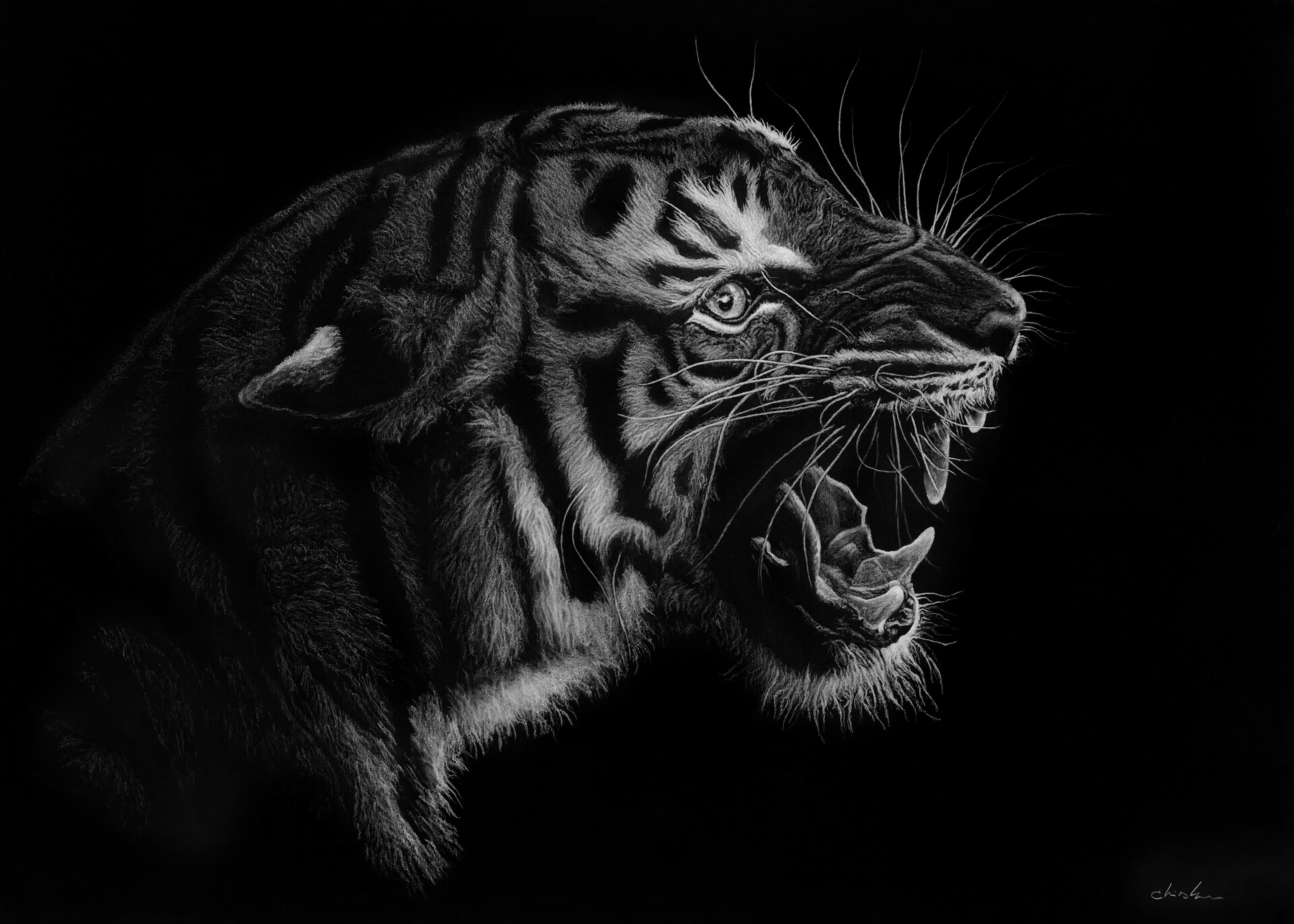 55776 Screensavers and Wallpapers Grin for phone. Download Art, Grin, Predator, Bw, Chb, Tiger pictures for free