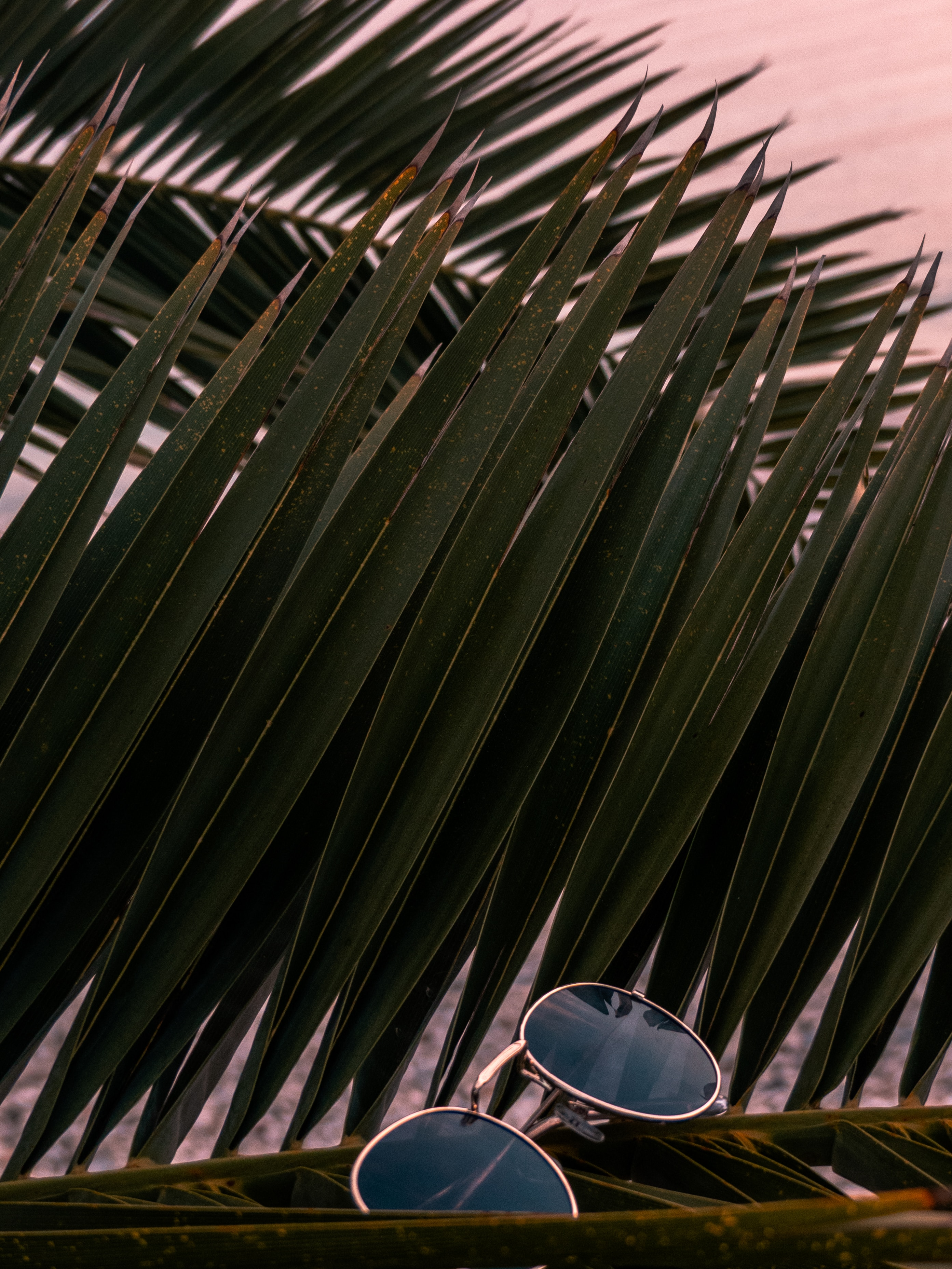 145668 download wallpaper Miscellanea, Miscellaneous, Sunglasses, Glasses, Spectacles, Palm, Branches, Leaves screensavers and pictures for free