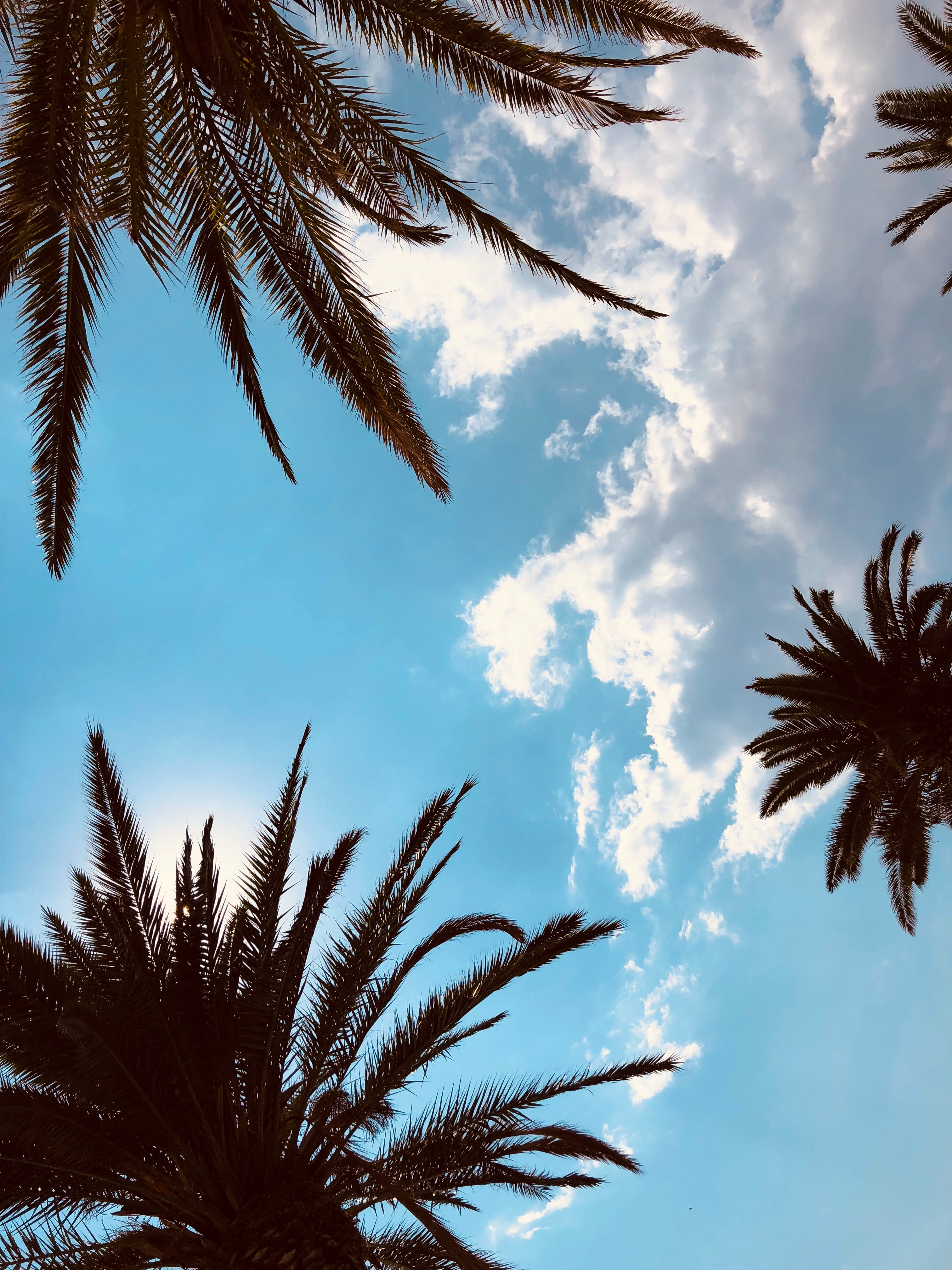 80473 download wallpaper Nature, Bottom View, Branches, Sky, Tropics, Leaves, Palms screensavers and pictures for free