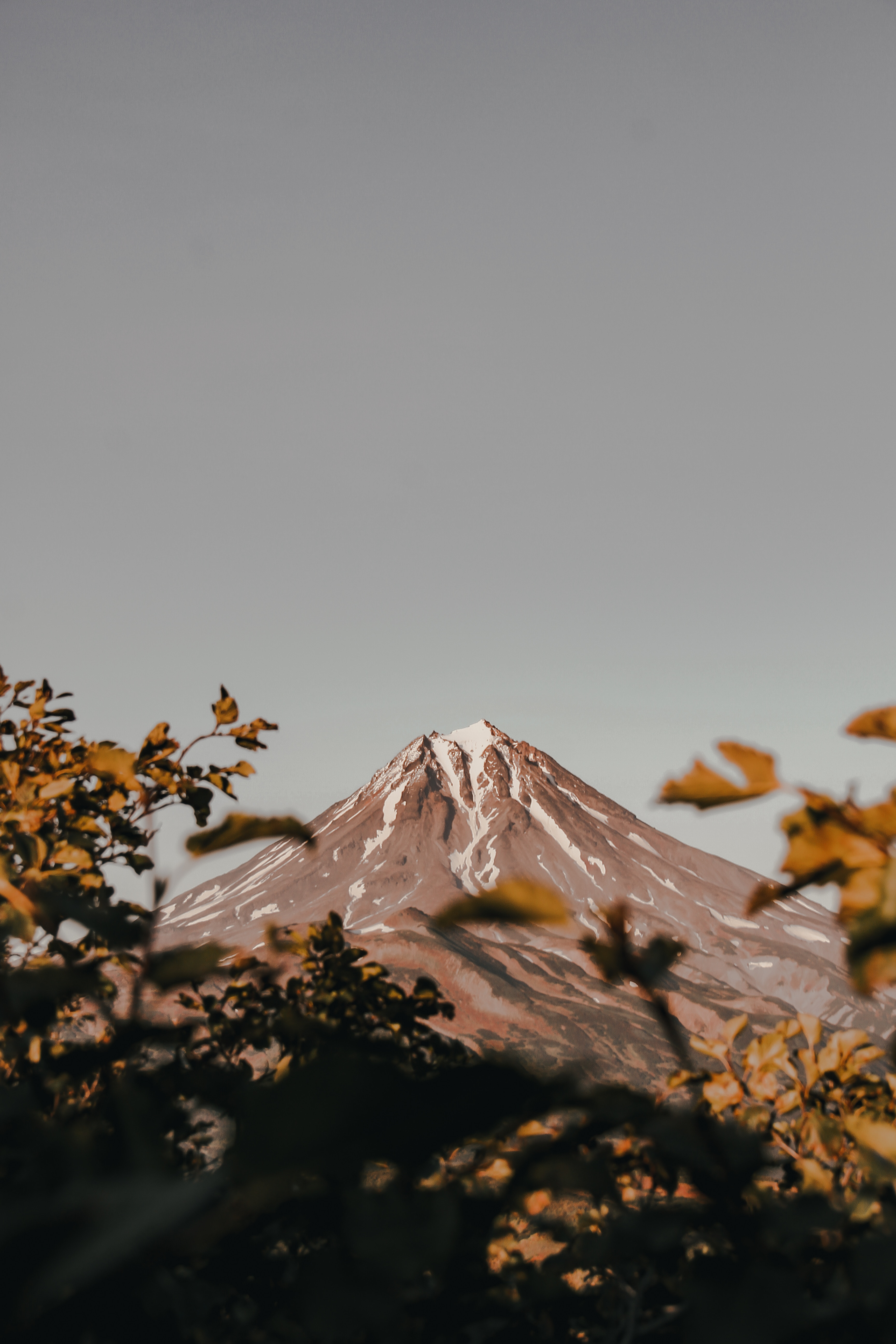 138980 download wallpaper Nature, Mountain, Vertex, Top, Volcano, Branches, Bush screensavers and pictures for free