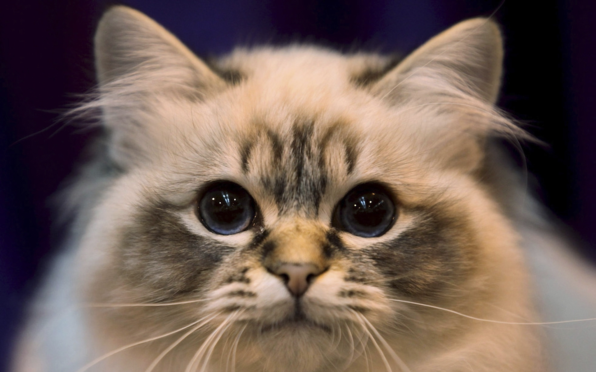 49016 download wallpaper Animals, Cats screensavers and pictures for free