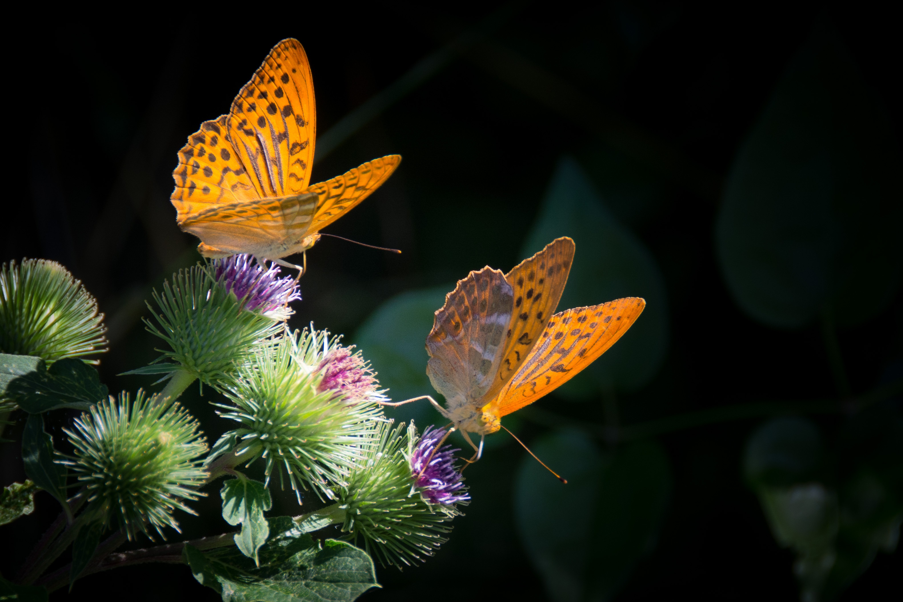 151128 download wallpaper Butterflies, Flower, Macro, Wings screensavers and pictures for free