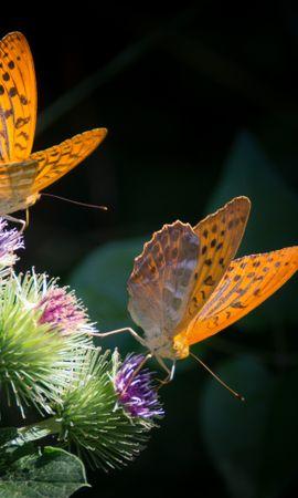 151128 descargar fondo de pantalla Macro, Mariposas, Alas, Flor: protectores de pantalla e imágenes gratis