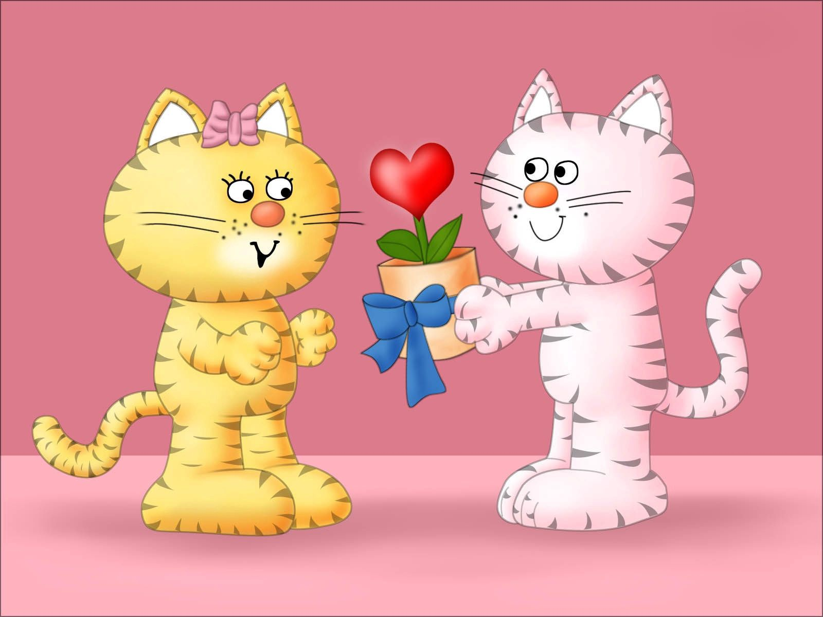 97877 download wallpaper Love, Lovers, Present, Gift, Cats screensavers and pictures for free