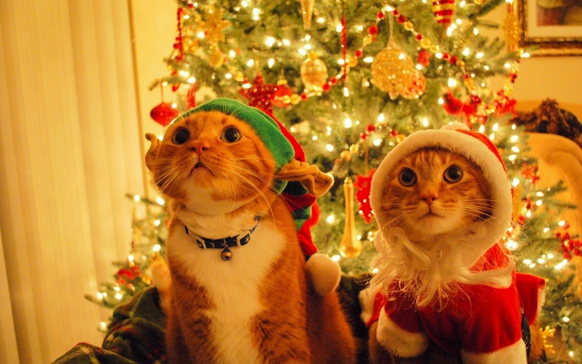 49154 download wallpaper Holidays, Animals, Cats screensavers and pictures for free