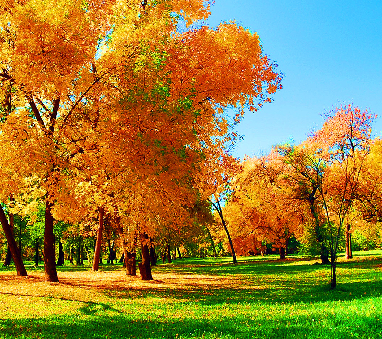 23150 скачать обои Пейзаж, Деревья, Трава, Осень - заставки и картинки бесплатно