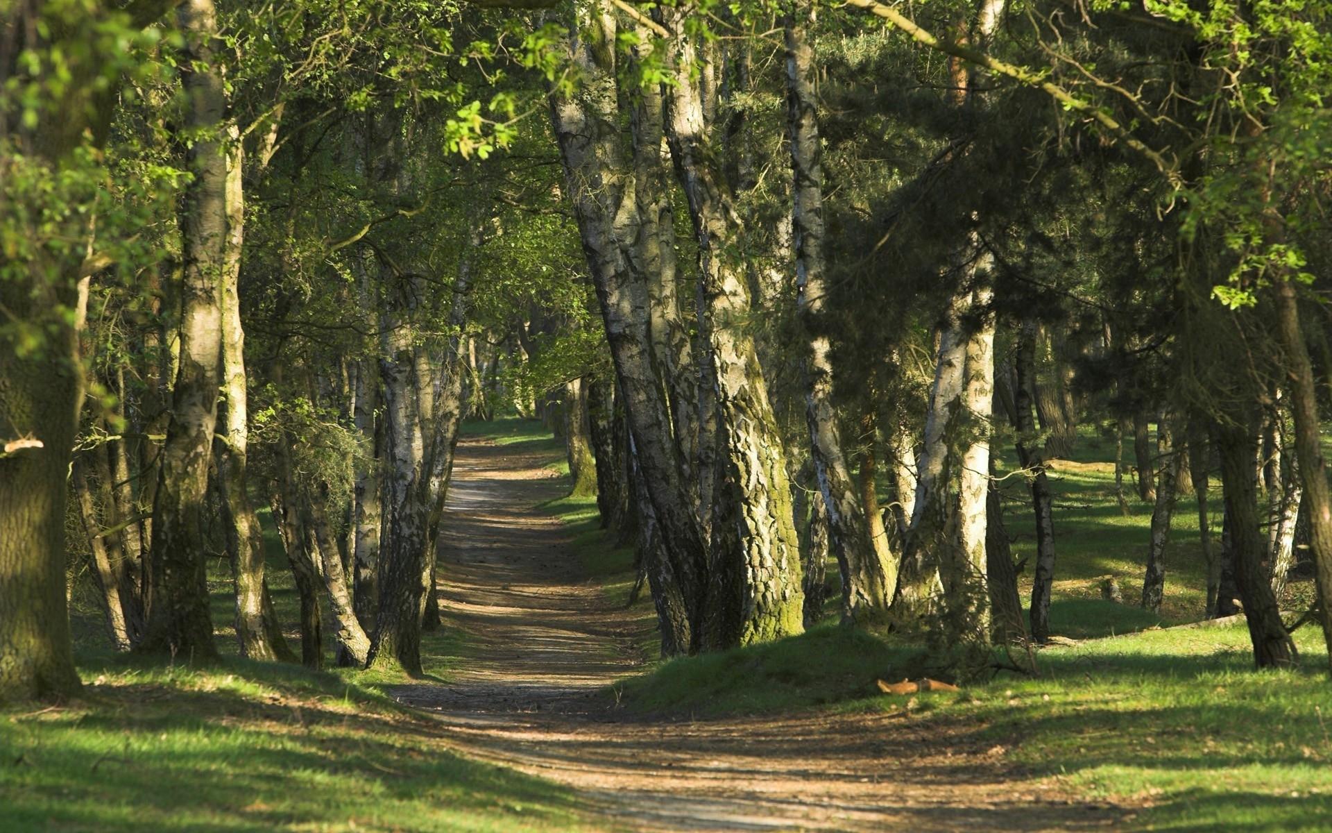49455 скачать обои Пейзаж, Природа, Деревья - заставки и картинки бесплатно