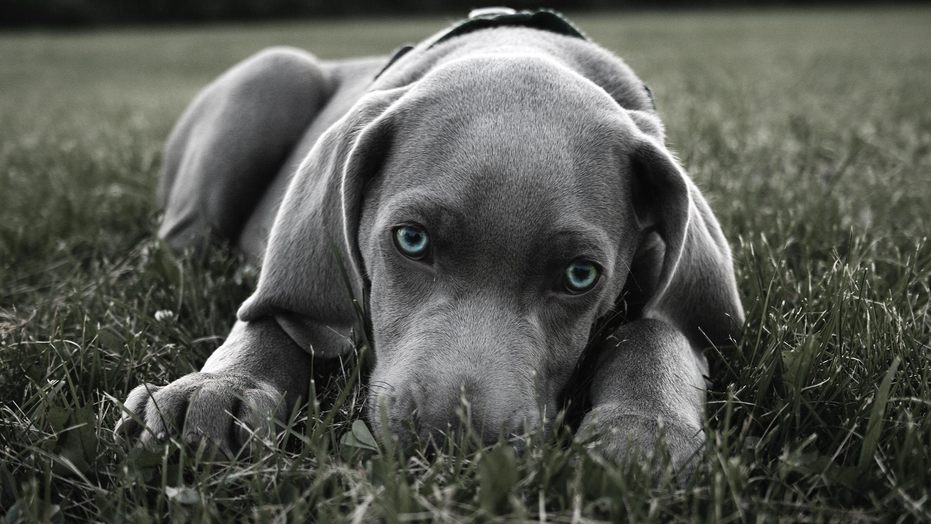 Скачать картинку Собаки, Животные в телефон бесплатно.