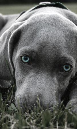 25062 скачать обои Животные, Собаки - заставки и картинки бесплатно