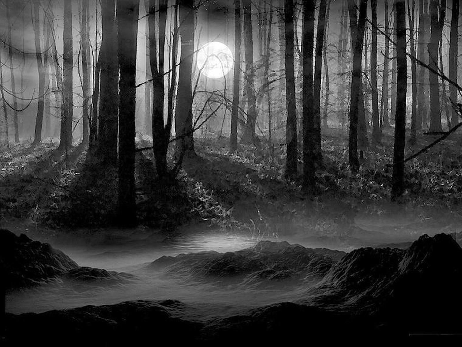 11230 скачать обои Пейзаж, Деревья, Ночь, Луна - заставки и картинки бесплатно