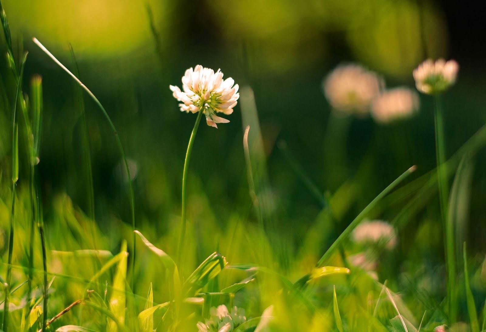 17353 скачать обои Растения, Цветы, Трава - заставки и картинки бесплатно