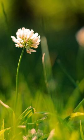 17353 download wallpaper Plants, Flowers, Grass screensavers and pictures for free
