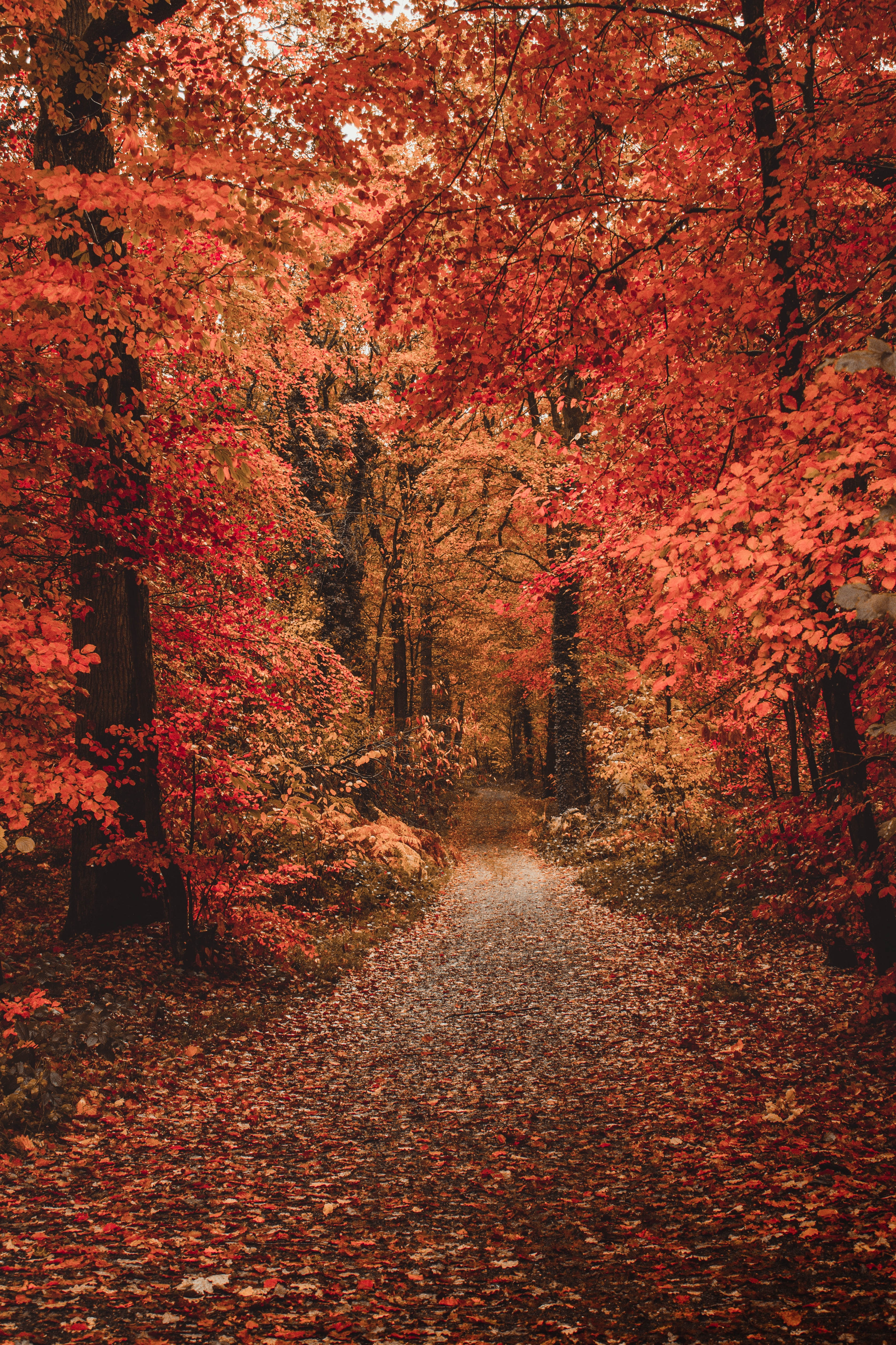 125662 download wallpaper Nature, Autumn, Forest, Path, Foliage, Trees, Autumn Colors, Autumn Paints screensavers and pictures for free