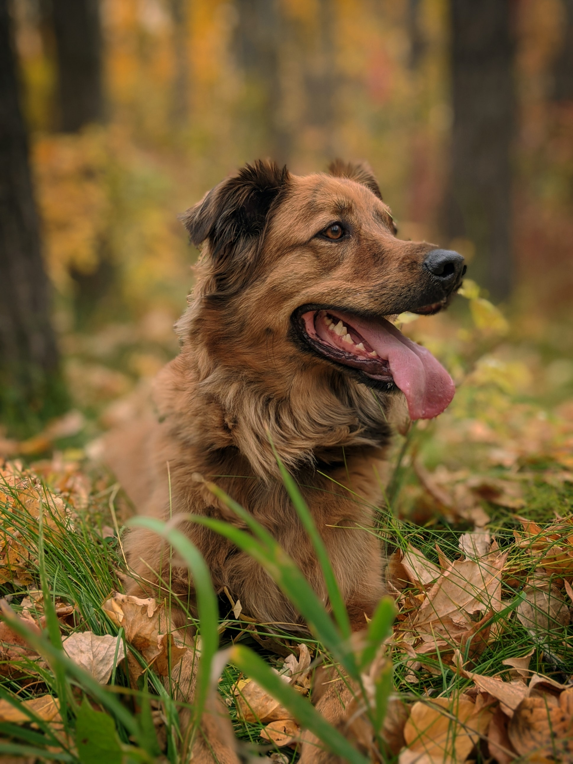 98315 download wallpaper Animals, Dog, Protruding Tongue, Tongue Stuck Out, Animal, Funny, Pet, Grass screensavers and pictures for free