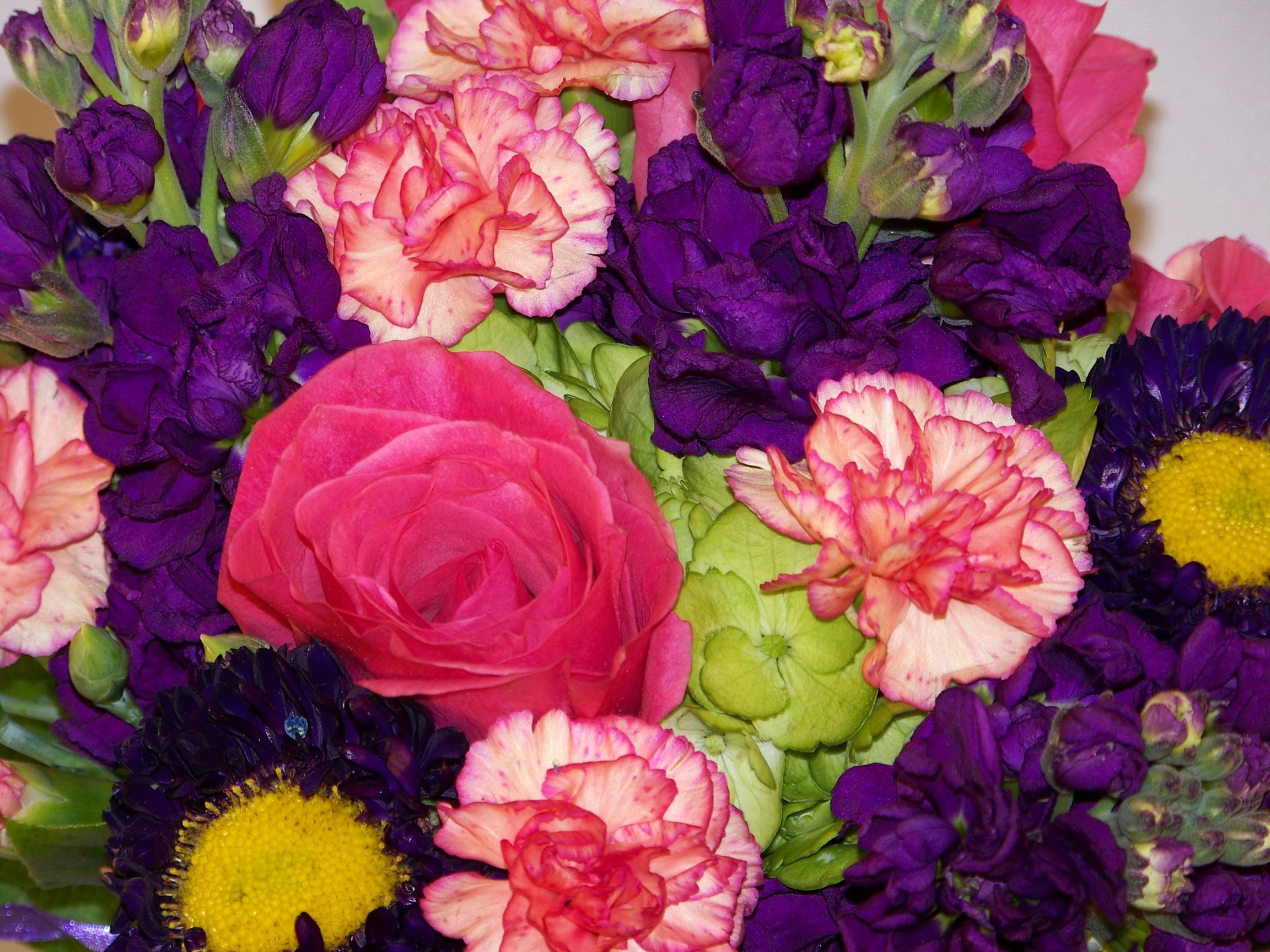 107578 скачать обои Цветы, Гвоздики, Букет - заставки и картинки бесплатно