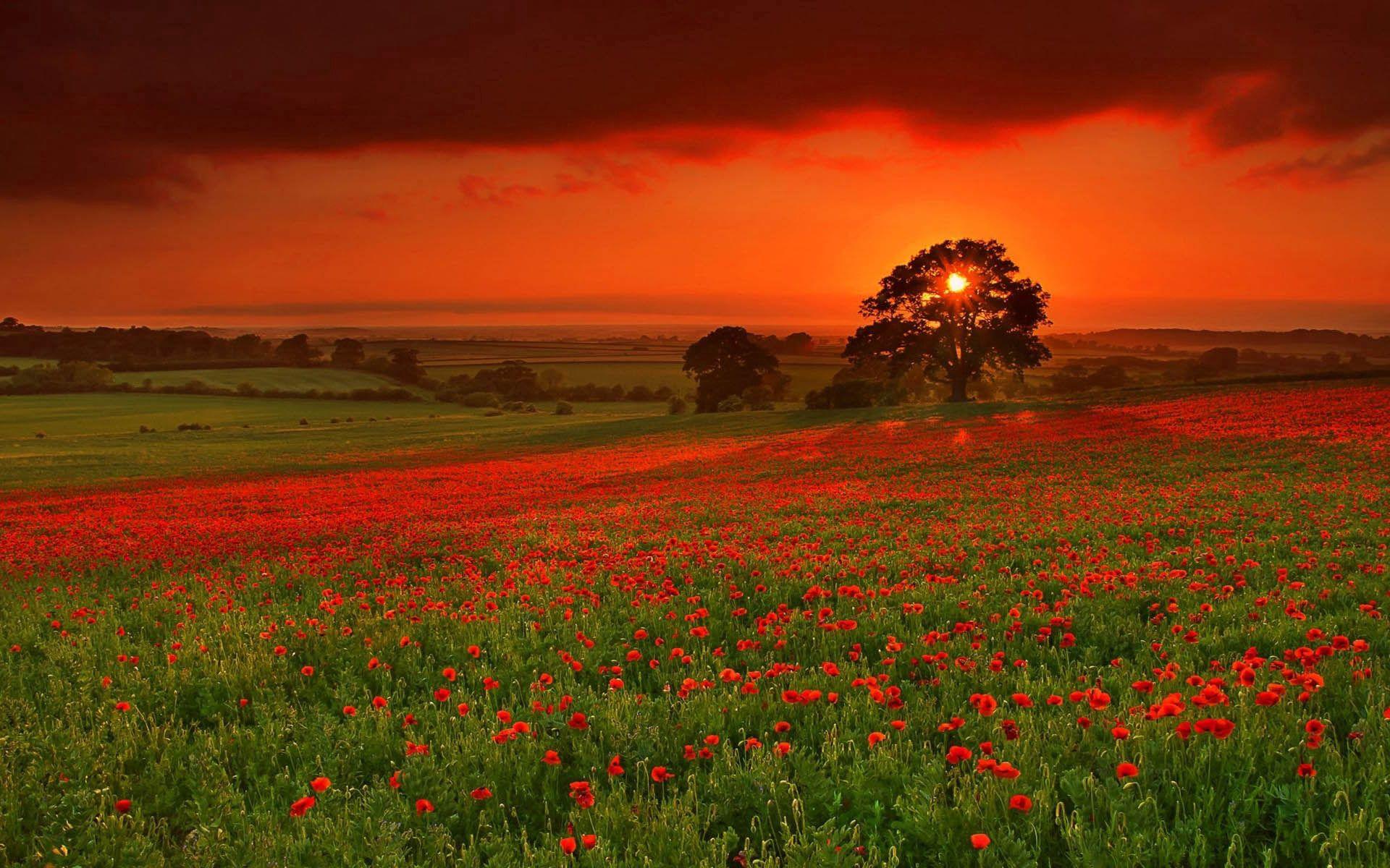 83468 обои 720x1280 на телефон бесплатно, скачать картинки Природа, Цветы, Осень, Солнце, Красный, Оранжевый 720x1280 на мобильный
