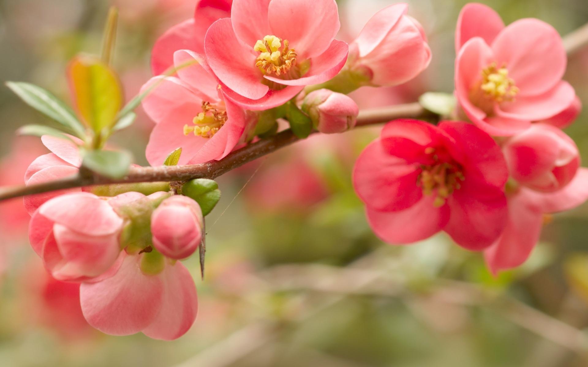 19486 скачать обои Растения, Цветы, Деревья - заставки и картинки бесплатно