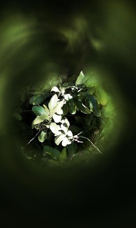 26427 скачать обои Растения, Фон, Листья - заставки и картинки бесплатно
