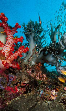 139051壁紙のダウンロード動物, 水中の世界, 水中ワールド, 海藻, 藻, 色とりどり, 異なる色, 魚-スクリーンセーバーと写真を無料で