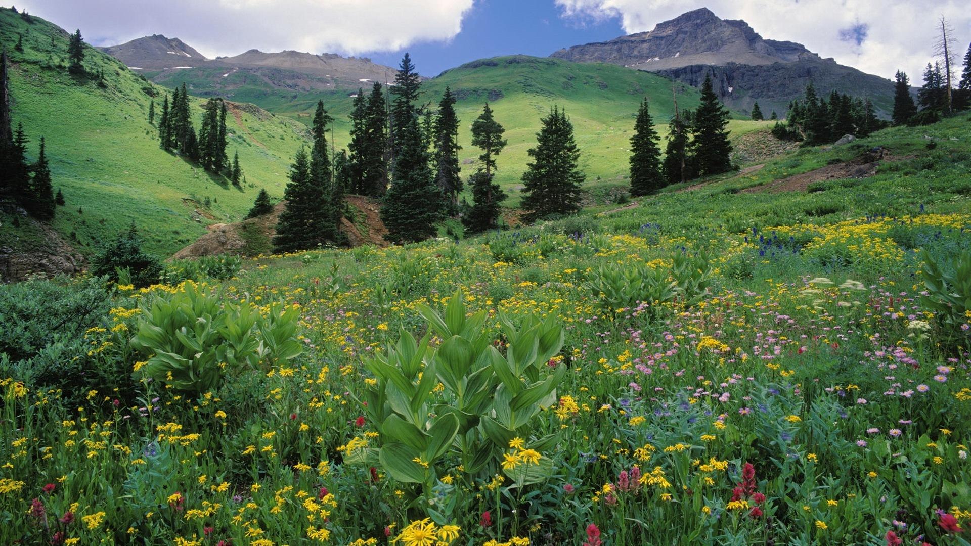 41251 скачать Зеленые обои на телефон бесплатно, Пейзаж, Цветы, Горы Зеленые картинки и заставки на мобильный
