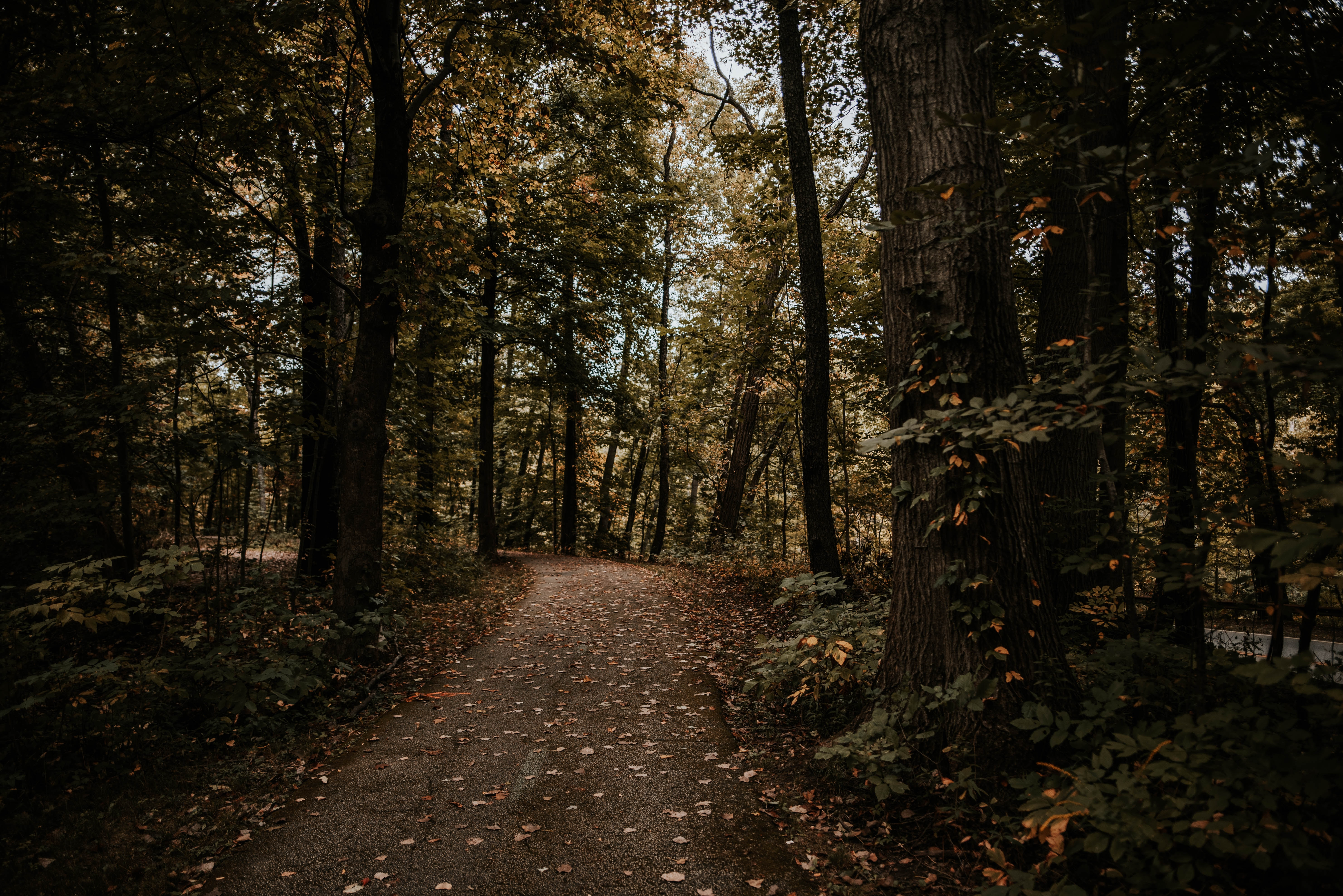 131212 download wallpaper Nature, Trees, Autumn, Forest, Path screensavers and pictures for free