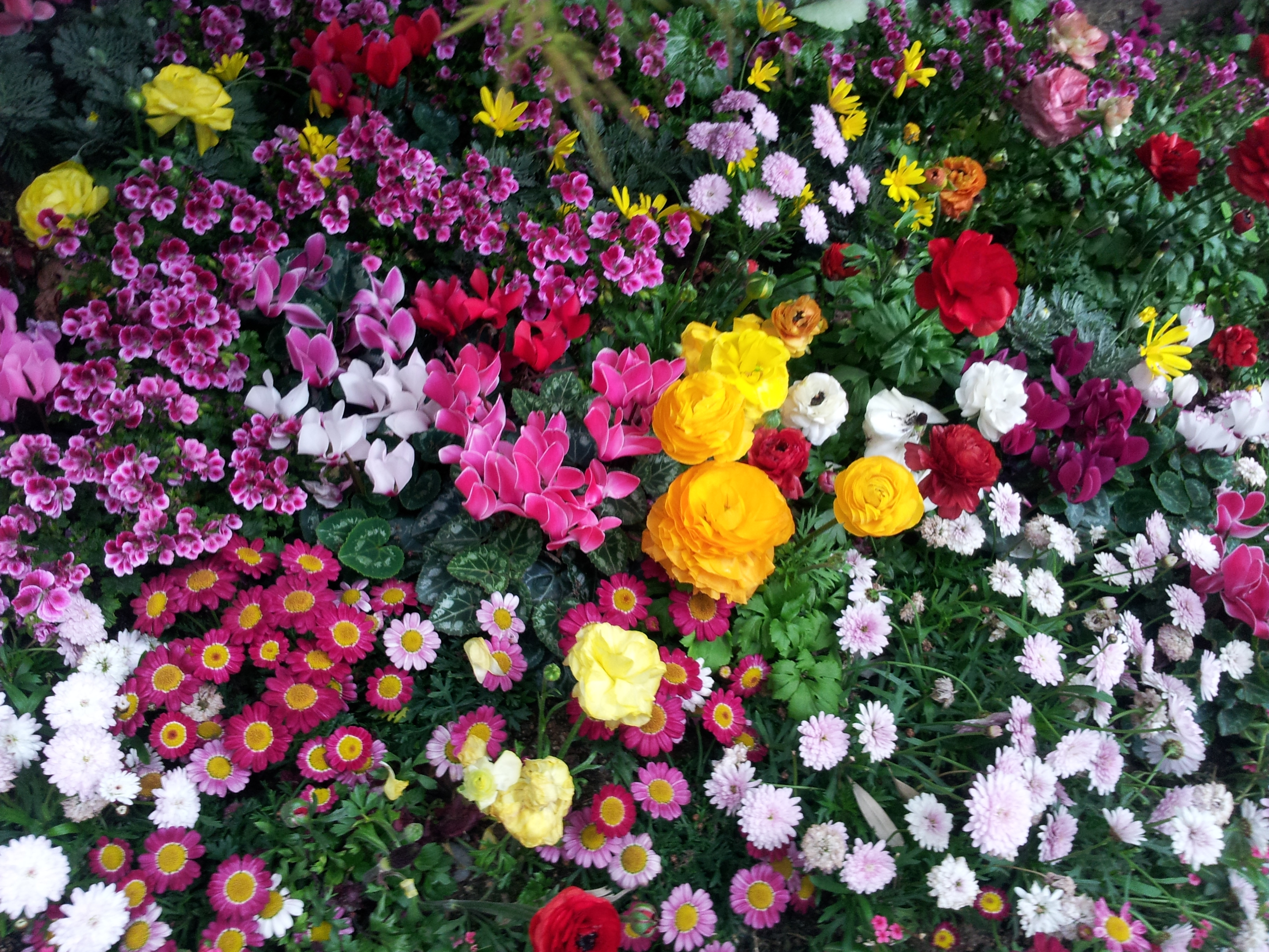 104400 Screensavers and Wallpapers Flower Bed for phone. Download Flowers, Flower Bed, Flowerbed, Flora pictures for free