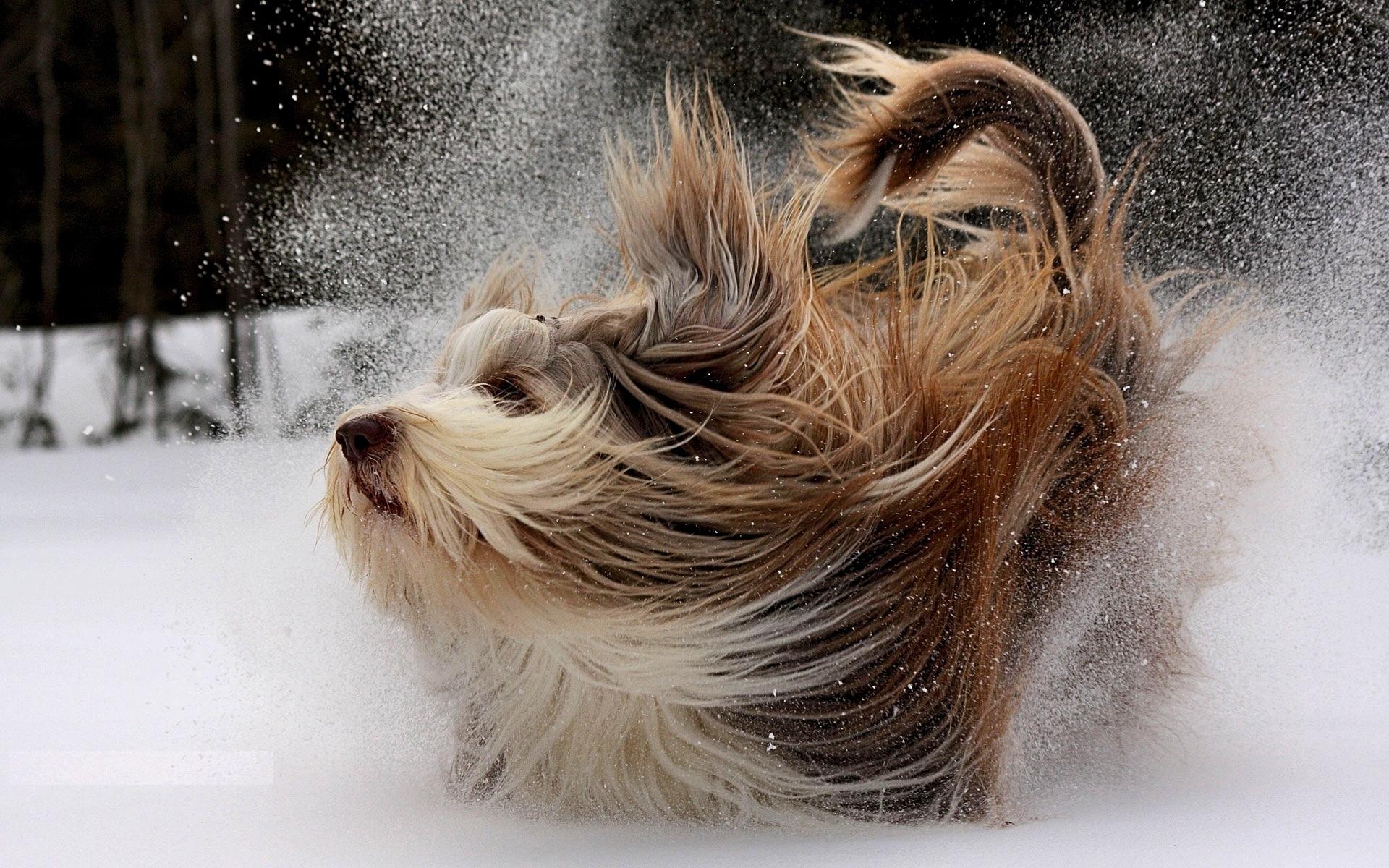 23551 скачать обои Животные, Собаки, Снег - заставки и картинки бесплатно