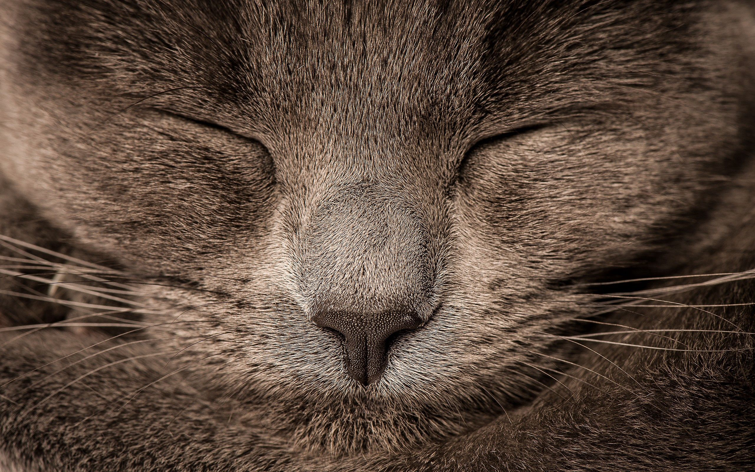 112088 download wallpaper Animals, Cat, Sight, Opinion, Eyes, Grey screensavers and pictures for free