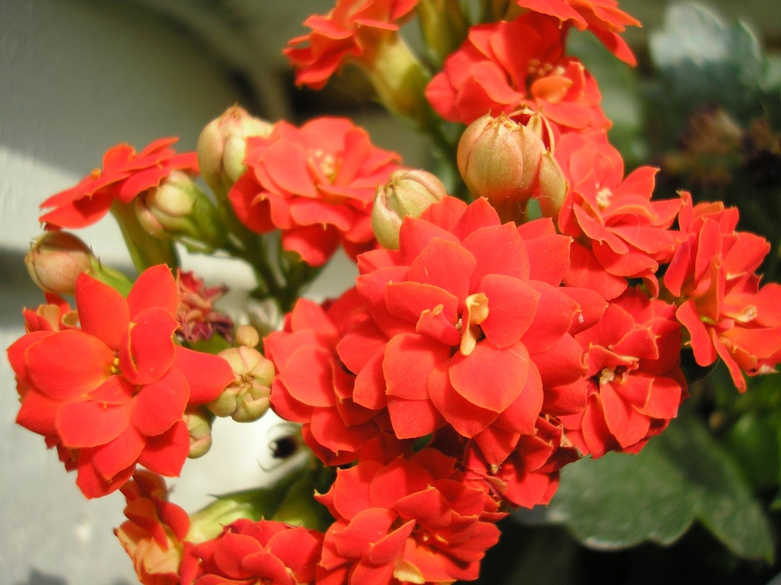9623 descargar fondo de pantalla Plantas, Flores: protectores de pantalla e imágenes gratis