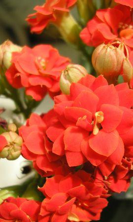 9623 скачать обои Растения, Цветы - заставки и картинки бесплатно