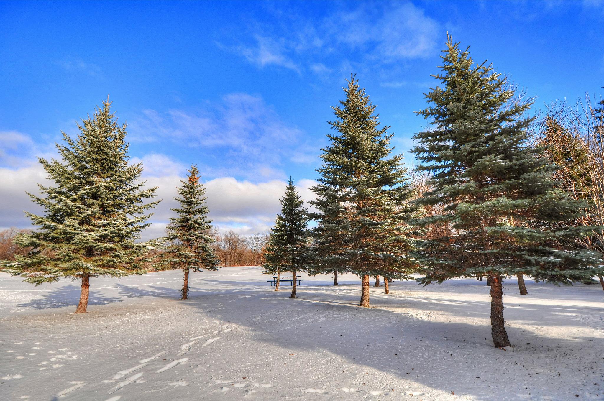 93447 papel de parede 1125x2436 em seu telefone gratuitamente, baixe imagens Inverno, Natureza, Árvores, Neve, Floresta 1125x2436 em seu celular