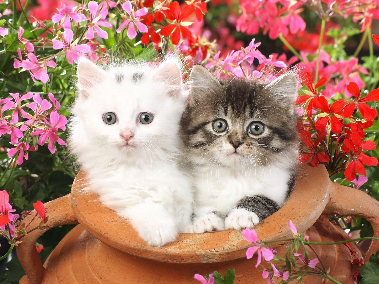 86238 завантажити шпалери Квіти, Тварини, Пара, Горщик, Кошенята, Кошенят - заставки і картинки безкоштовно
