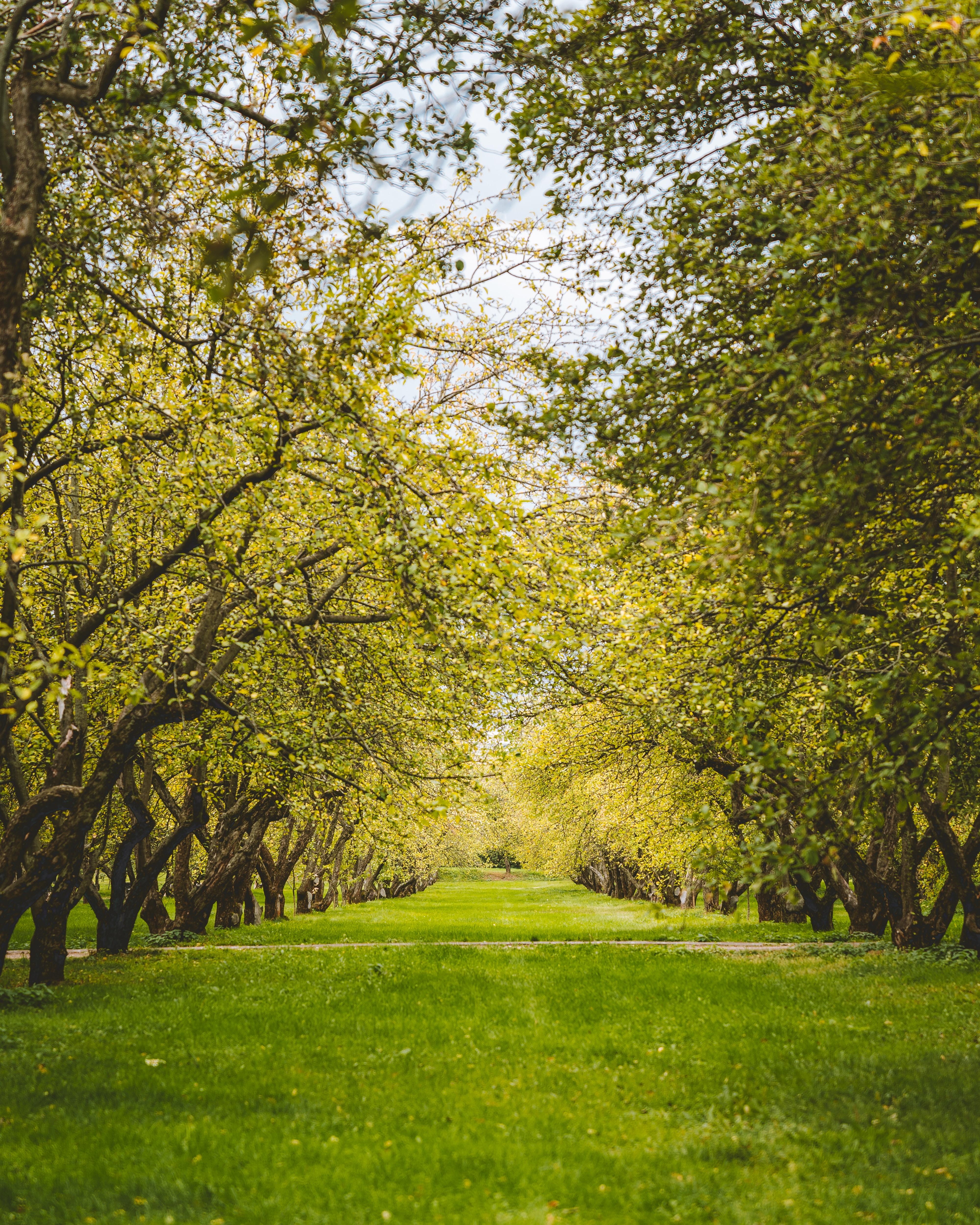 86207 скачать обои Природа, Деревья, Зелень, Сад, Газон - заставки и картинки бесплатно
