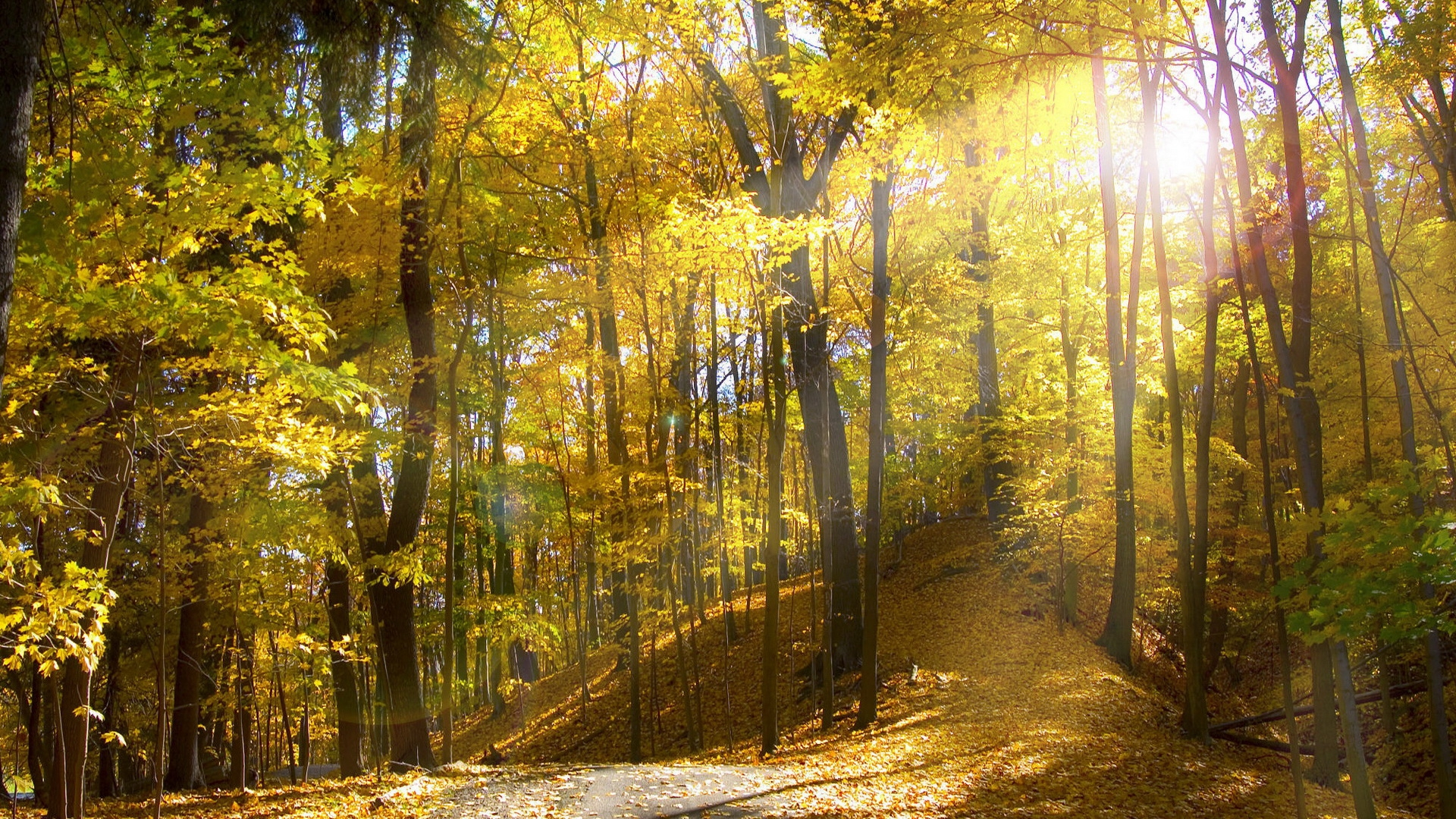 33963 download wallpaper Landscape, Trees, Autumn screensavers and pictures for free