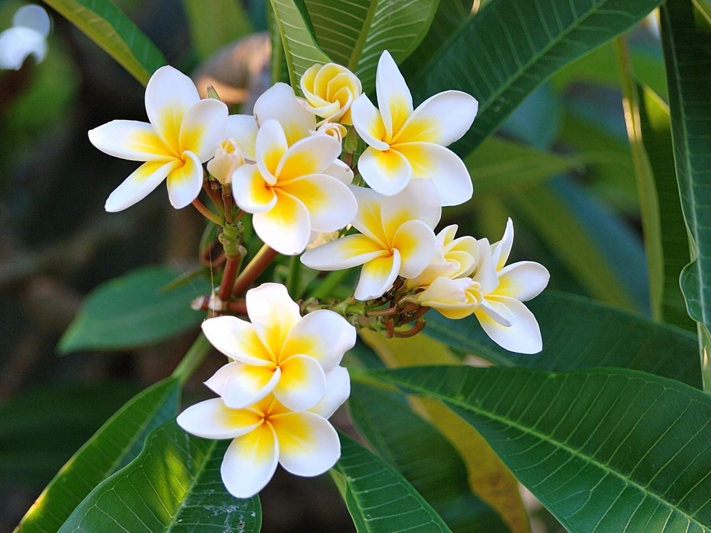 31800 Hintergrundbild herunterladen Blumen, Pflanzen - Bildschirmschoner und Bilder kostenlos