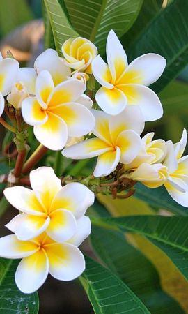 31800 Заставки и Обои Растения на телефон. Скачать Растения, Цветы картинки бесплатно