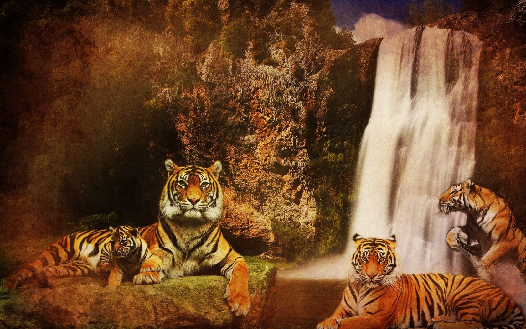 63932 Screensavers and Wallpapers Predators for phone. Download Animals, Cats, Water, Background, Mountains, Tigers, Predators, Rocks, Waterfall pictures for free