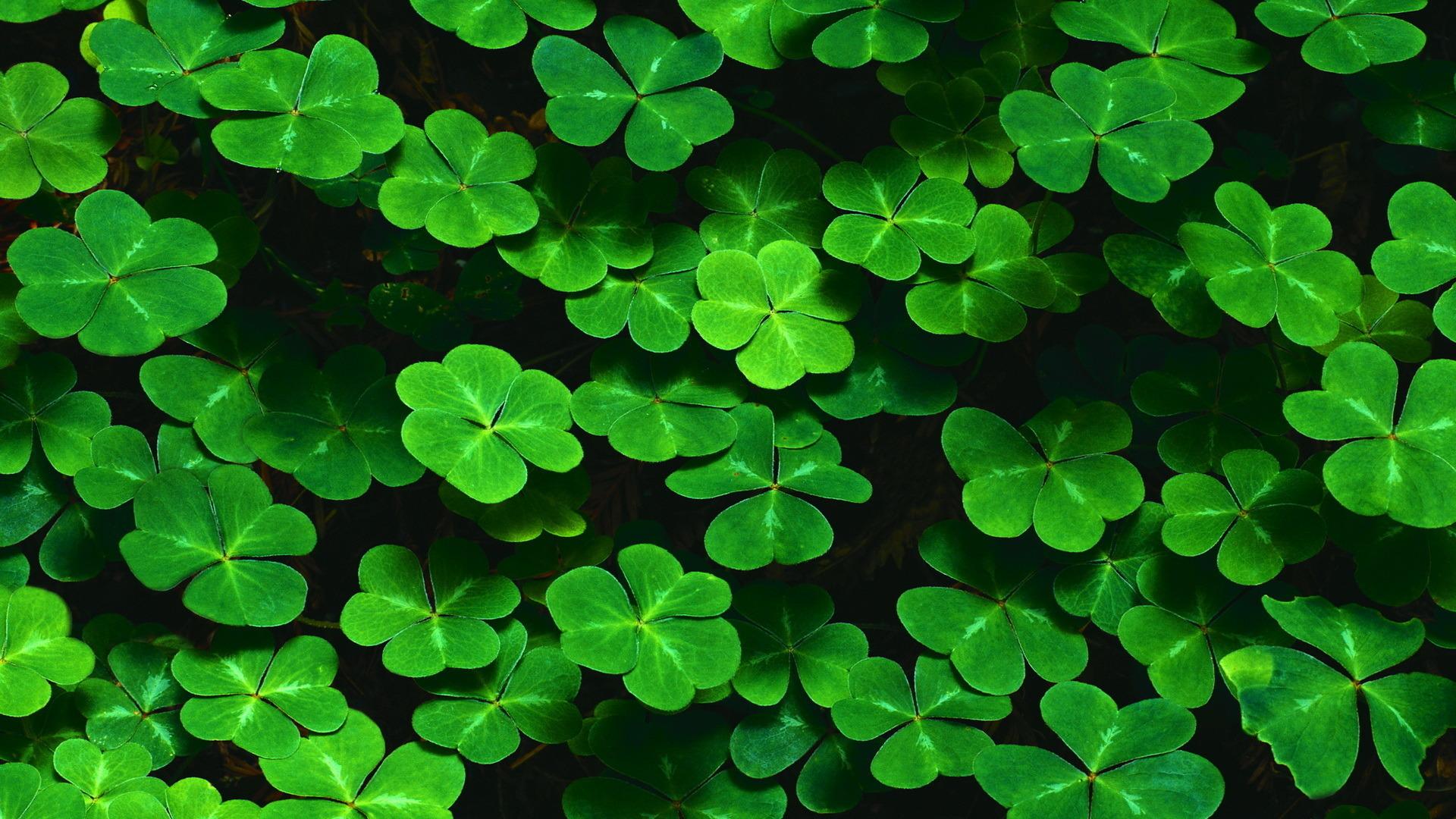 39096 скачать обои Растения, Листья - заставки и картинки бесплатно