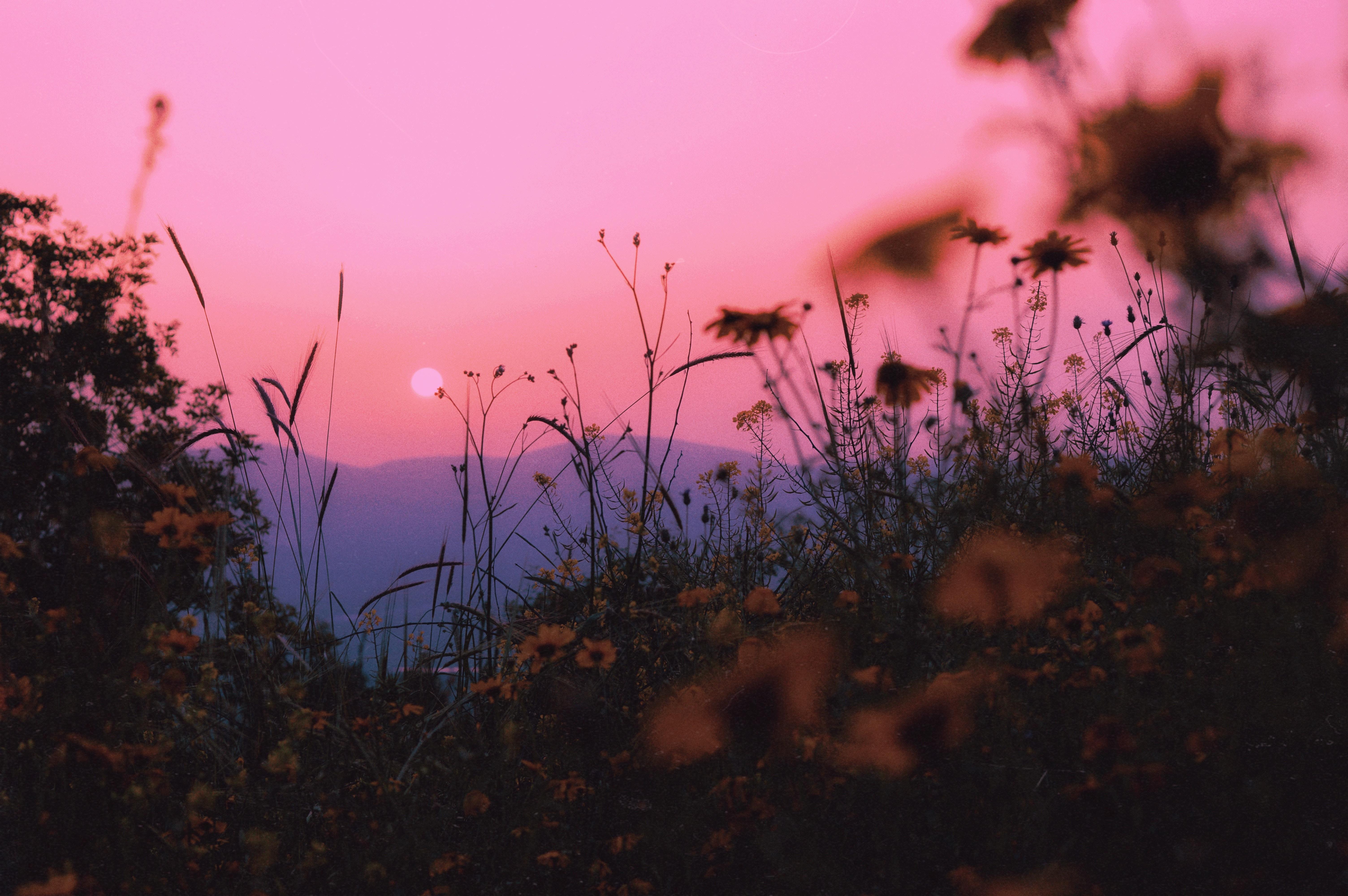 111814 Заставки и Обои Солнце на телефон. Скачать Закат, Пейзаж, Солнце, Природа, Трава, Горы, Горизонт картинки бесплатно
