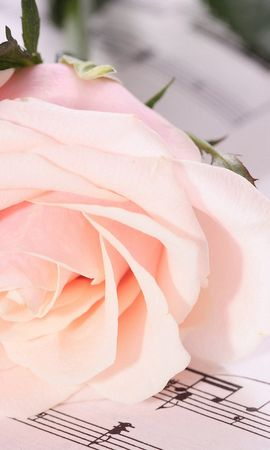11504 скачать обои Растения, Цветы, Розы, Открытки - заставки и картинки бесплатно